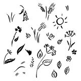 Collection of flower sketches Royalty Free Stock Images