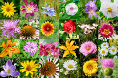 Collection of flowers Royalty Free Stock Images