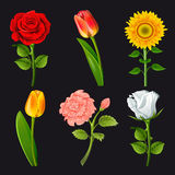 Collection of flowers stock illustration