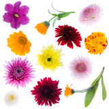 Collection of flowers Royalty Free Stock Image