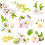 Collection of flowers of fruit trees Royalty Free Stock Photos