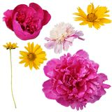 Collection of flowers. Isolated on white background Royalty Free Stock Photo