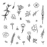 Set with different plants. Collection of flowers and plants. Used for various types of design. Linear style. Vector illustration Royalty Free Stock Image