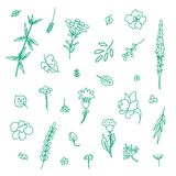 Set with different plants. Collection of flowers and plants. Used for various types of design. Linear style. Vector illustration Stock Images