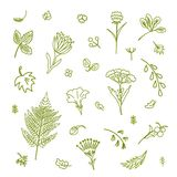 Set with different plants. Collection of flowers and plants. Used for various types of design. Linear style. Vector illustration Stock Photos
