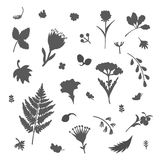 Set with different plants. Collection of flowers and plants. Used for various types of design. Vector illustration Stock Photo
