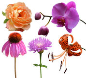 Collection of flowers. Roses lilies orchid milk thistle echinacea stock photo