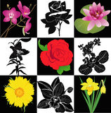 Collection of flowers roses lilies orchid narcissu. S sunflower vector isolated royalty free illustration