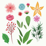 Collection flowers spring floral season Royalty Free Stock Photography