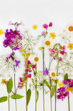 Collection of flowers. Stock Photography