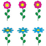 Collection flowers on white background Royalty Free Stock Photo