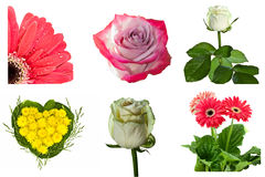 Collection of flowers on white background Royalty Free Stock Photography