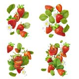 Flying Fresh tasty ripe strawberry with green leaves isolated stock photos