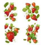 Flying Fresh tasty ripe strawberry with green leaves isolated royalty free stock images