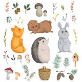 Collection of forest animals, mushroom, plant, berry, cones. Royalty Free Stock Image