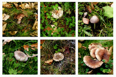 Collection of Forest Mushrooms Royalty Free Stock Photography