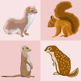 Collection from four beasts Royalty Free Stock Image