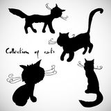 Collection of four cats. For the realization of your ideas and business Royalty Free Stock Images