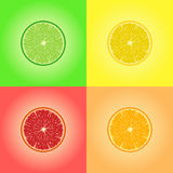 Collection of four citrus fruits. Lemon, lime, orange, grapefruit. Collection of four citrus fruits. Vector EPS10 Royalty Free Stock Photos