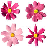 Collection of four pink flowers Stock Images