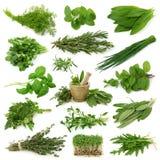 Collection fraîche d'herbes photo libre de droits