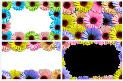 Collection Frame made of colorful Flowers isolated. Stock Photos