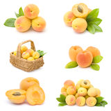 Collection of fresh apricot fruits Stock Image