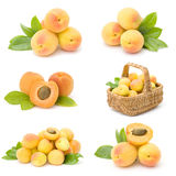 Collection of fresh apricot fruits Stock Photography