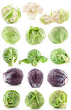 Collection of fresh cabbage stock image
