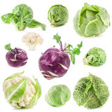 Collection of fresh cabbage stock photos