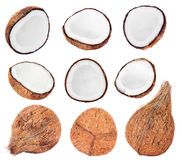 Collection of fresh coconuts on white Stock Image