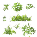 Collection of fresh dill Royalty Free Stock Image