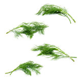 Collection of fresh green fennel isolated on a white Stock Image