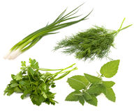Collection of fresh greens. On the white background Royalty Free Stock Photography