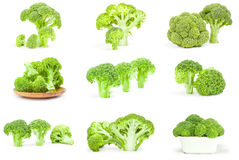 Collection of fresh head of broccoli isolated on a white background with clipping path. Set of fresh raw broccoli on a white background Stock Photos