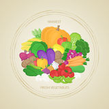 Collection of fresh, healthy vegetables in circle. Autumn harvest. Label, sticker, banner for design. Natural healthy food concept Royalty Free Stock Images