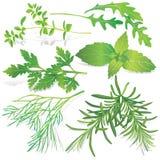 Collection of fresh herbs stock photos
