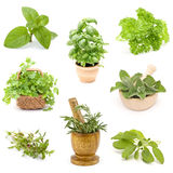 Collection of fresh herbs. Collage stock photography
