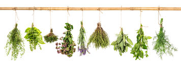 Collection of fresh herbs. Basil, sage, dill, thyme, mint, laven Royalty Free Stock Images