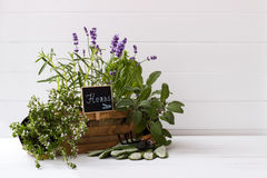 Collection of fresh herbs. Bunch of garden fresh herbs and garden tools over white background stock photos