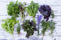 Collection of fresh herbs. On a wooden board Royalty Free Stock Images