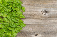 Collection of fresh large basil leafs on aged wooded table Stock Photo