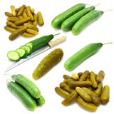 Collection of fresh, marinated  cucumbers Royalty Free Stock Photography