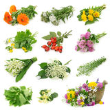 Collection of fresh medicinal herb stock image