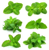 Collection for fresh mint Royalty Free Stock Image