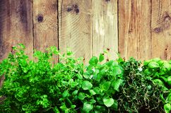 Collection of fresh organic herbs melissa, mint, thyme, basil, parsley on wooden background. Banner. Copy space Stock Photography