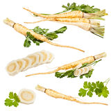 Collection of fresh parsley with root leaf Stock Photos
