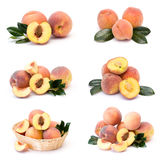 Collection of fresh peach fruits Royalty Free Stock Photography