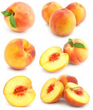 Collection of fresh peach fruits isolated Royalty Free Stock Images