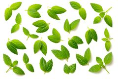 Collection of fresh peppermint leaves isolated on white, top view. Collection of peppermint leaves isolated on white background royalty free stock photography